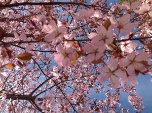 kirsikka_taivas