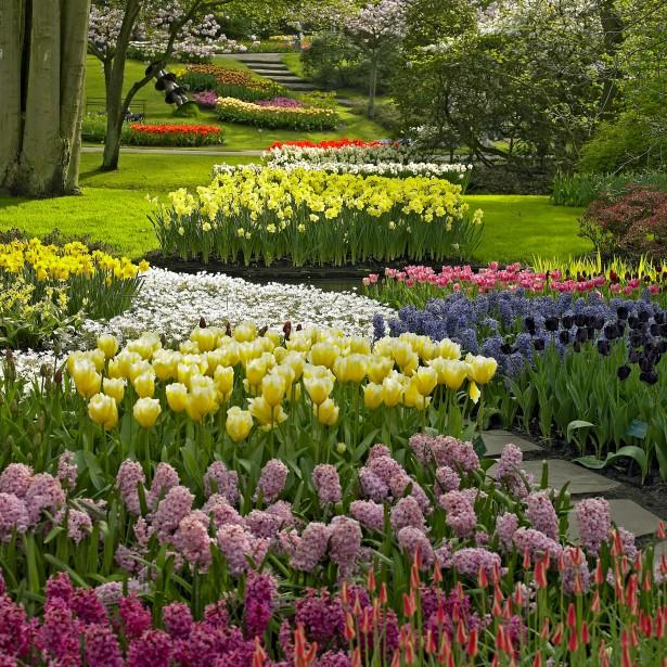 Hyacinthus + Tulipa