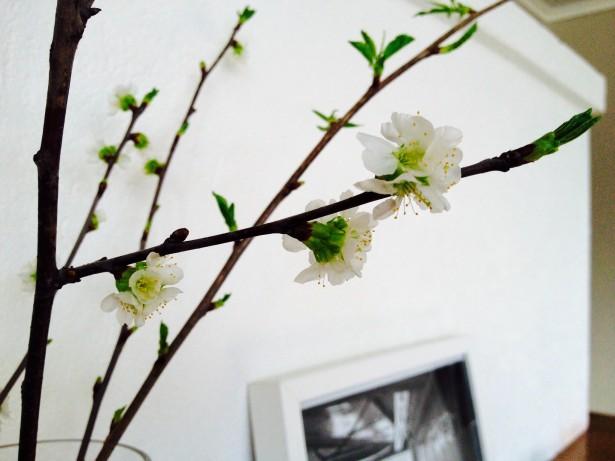 Kirsikka 3