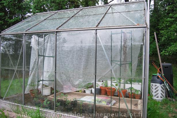 Kasvihuoneessakin hallaharsoa kannattaa alkuun käyttää.