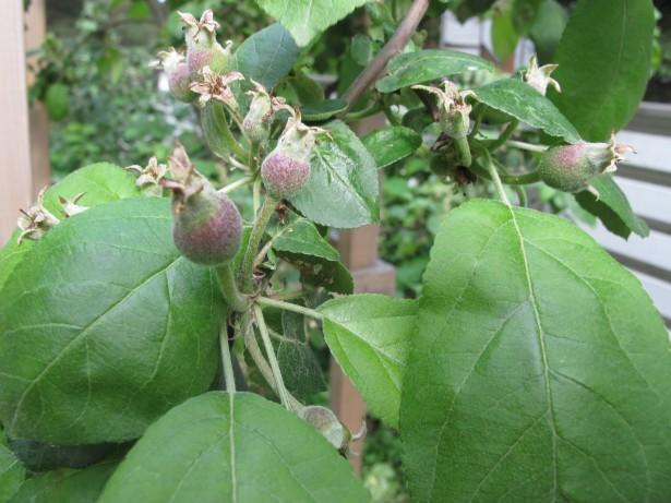 4.omenanraakileet