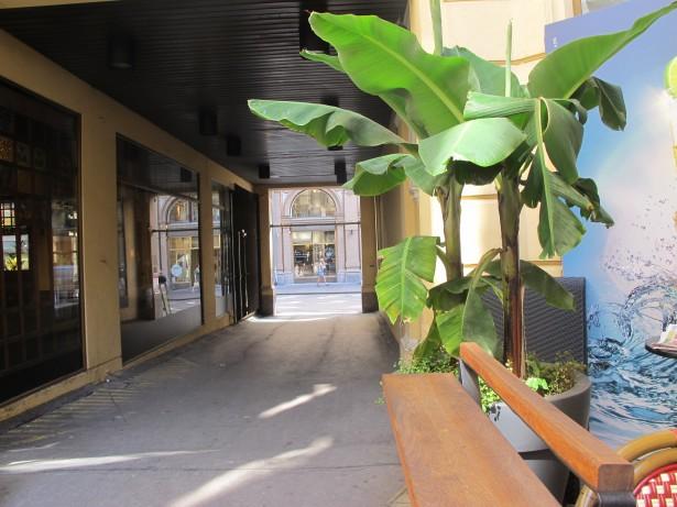 15.banaani