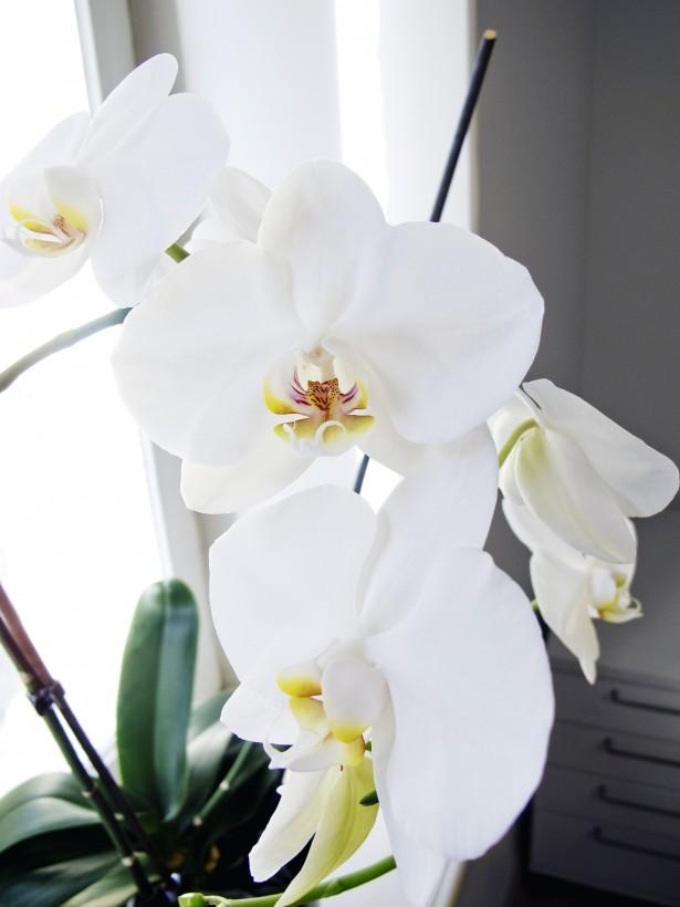 orkidea2 copy