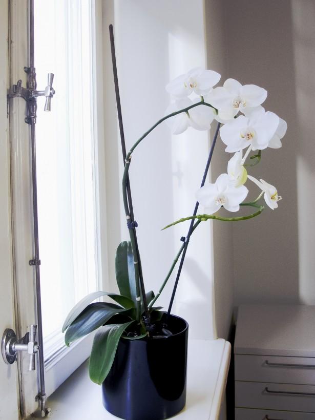 orkidea3