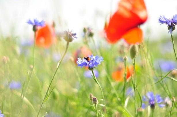 meadow-540880_1280