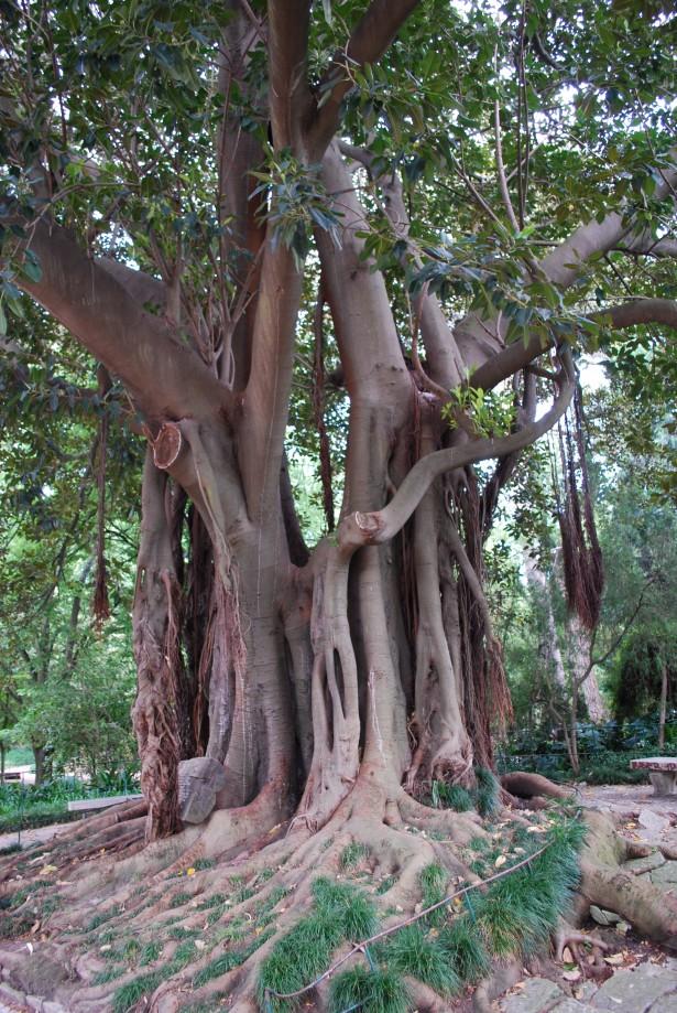 Lisboa_-_Jardim_da_Estrela_-_Árvore