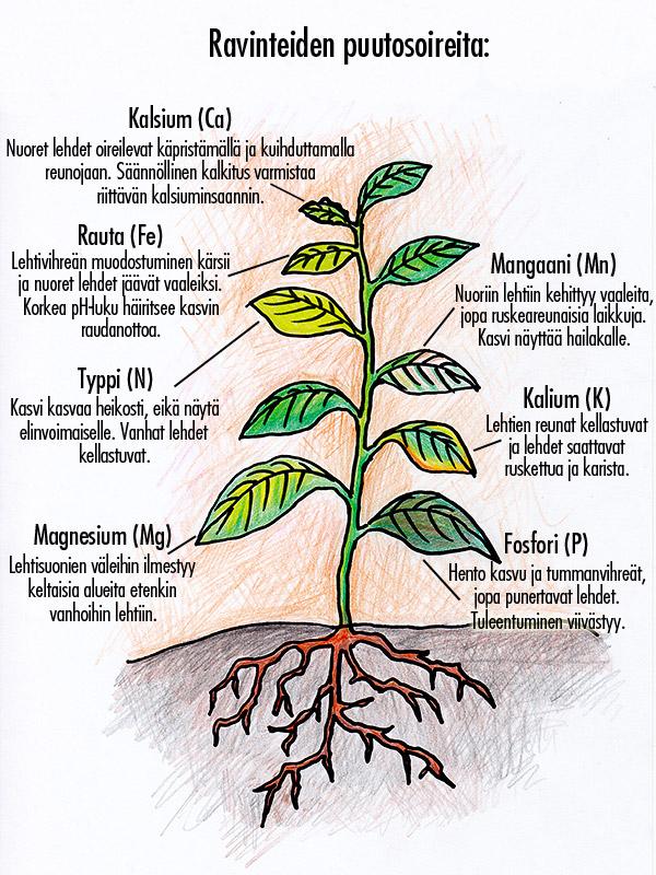 Kasvien puutosoireet