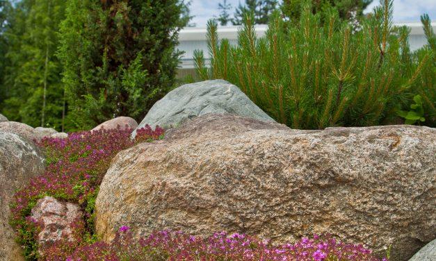 Heidin kesässä kukkivat kivikkokukat