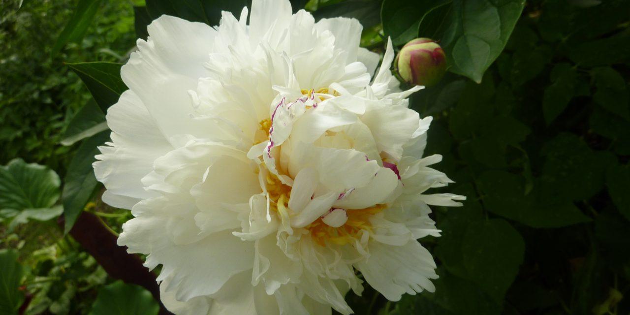 Rikkauksien ja kunnian kukka