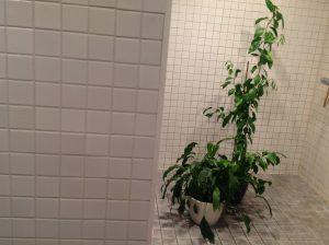 Kaskvit_suihkussa