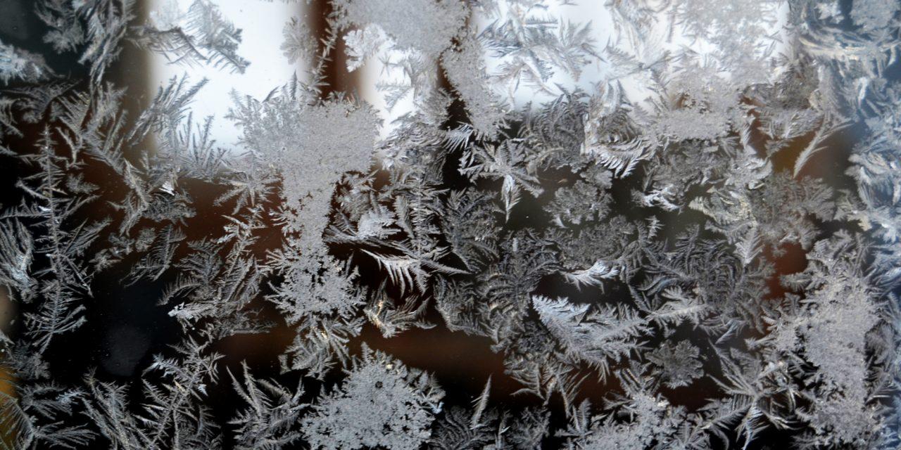 Talvipihojen kauneudesta