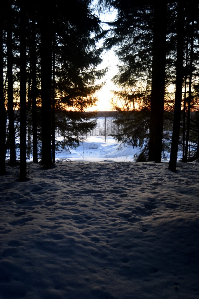 talvinen_metsä