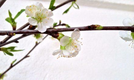 Kevään korvalla