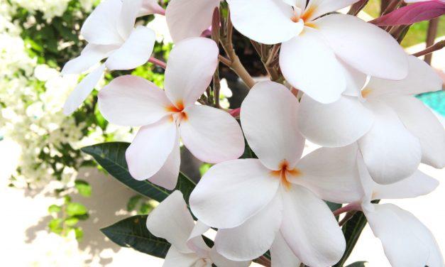 Kukkaistuoksujen aatelia
