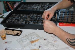 Isot sormet ja pienet siemenet, yhdistelmä jossa hammastikut ovat avuksi. Samanlaisia kasvatuslaatikoita saa 12-70 kappaleen turvepelletillä ja hinnat alkaen 3,50 euroa.