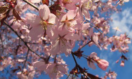 Kukkia maassa, kukkia puussa