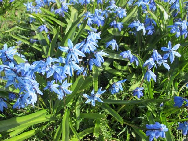 6.sininen