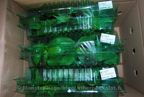 Sardiinit purkissa, pienet taimenet huutavat kilpaa päästäkseen tilavammille kasvupaikoille.