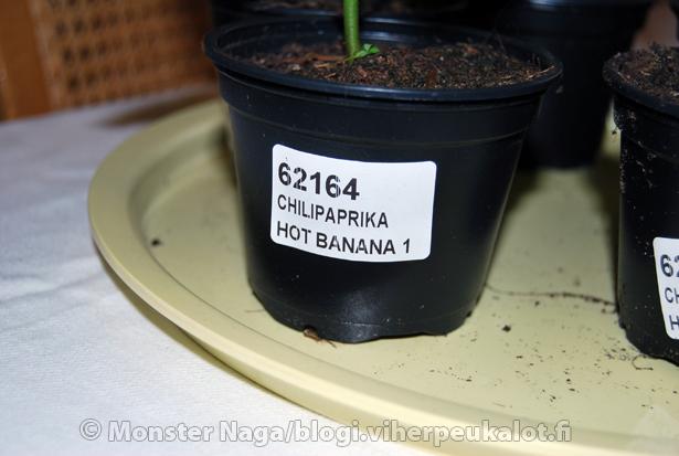 Taimien nimet ovat helposti luettavissa taimiruukuista. Isompiin ruukkuihin siirryttäessä  -varsinkin jos lajikkeita on useampia- kannattaa taimet merkata esim jäätelötikkuihin kirjoittamalla.