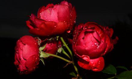 Ruusun aikaa ja taikaa