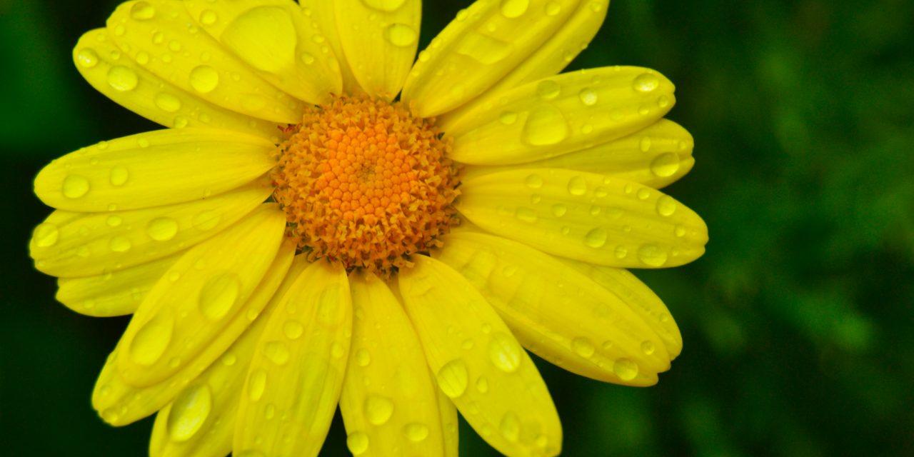 Hyvän mielen kukkapostikortteja