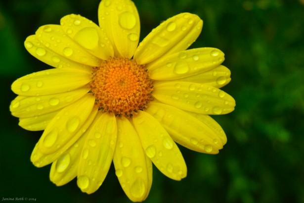keltainenkukkapostikortti