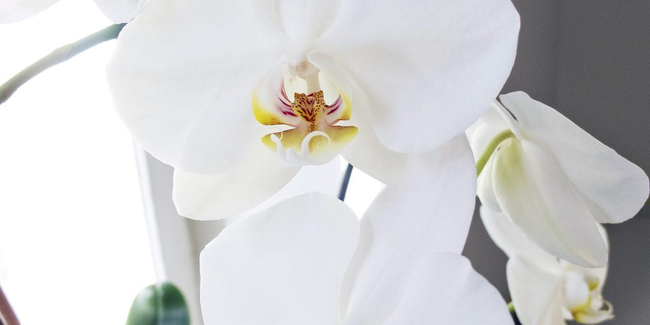 Yhdeksän täydellistä kukkaa