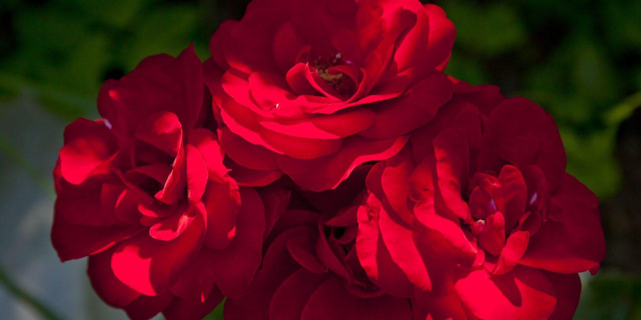 Ruusuisia unelmia – osa 1