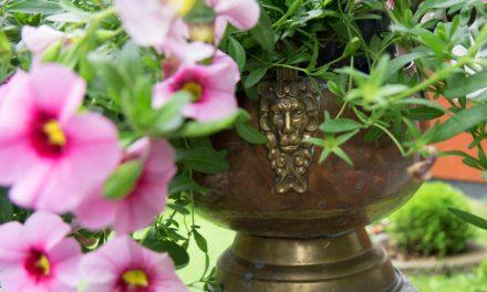 Petuniat ja ripaus antiikkia
