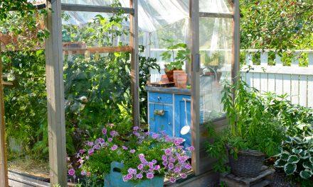 Kasvihuonekuulumisia