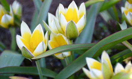 Kevät mielessä