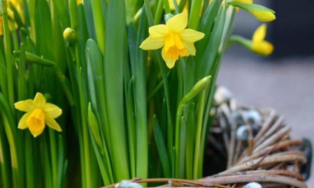 Helppo ja nopea pääsiäisistutus