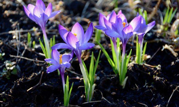 Kevätpuutarhassa juuri nyt