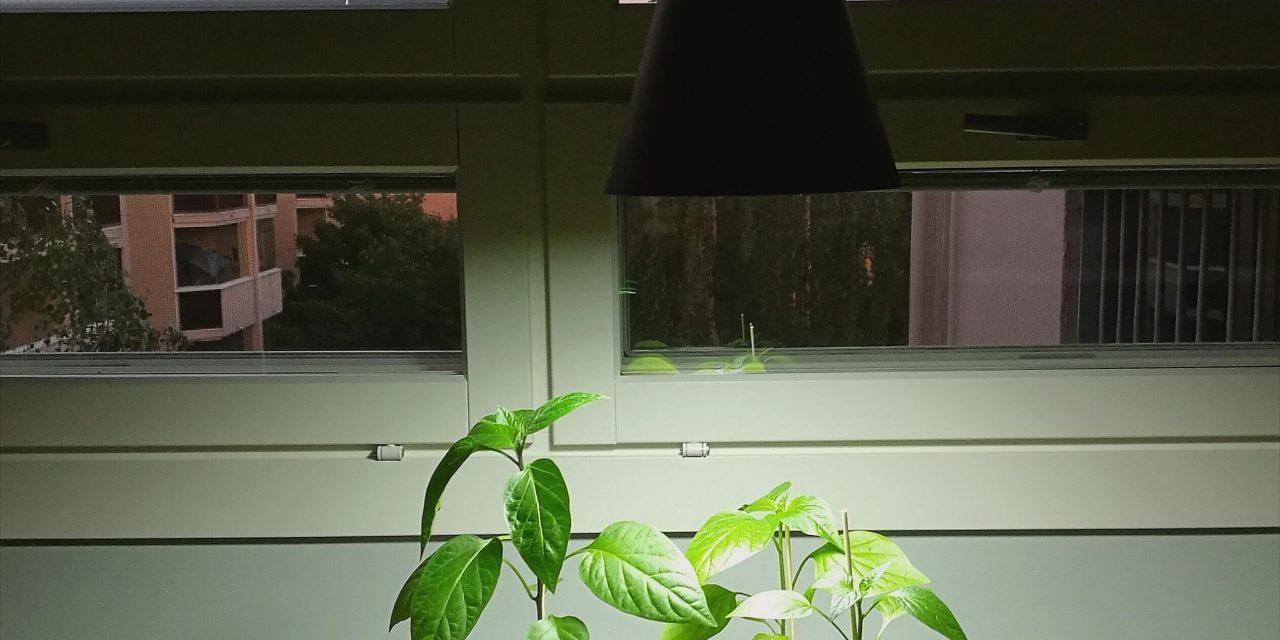 Valoa kasveille