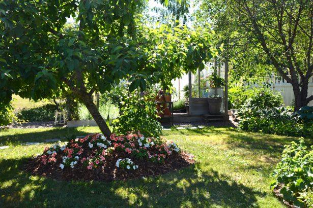 ahkeraliisa-omenapuun-alla