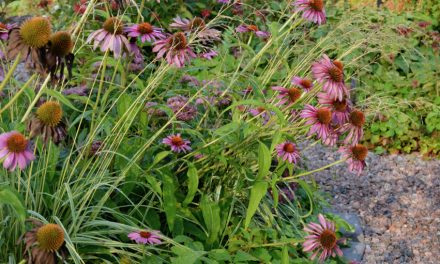 Syyskuun kukkaloistoa