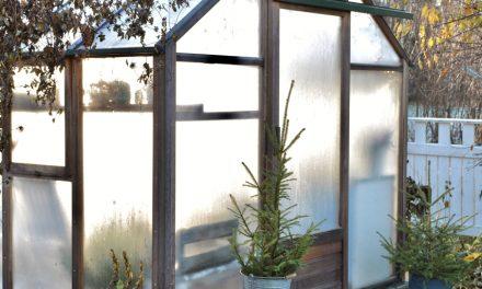 Ripaus joulua kasvihuoneessa
