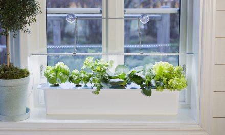 Valoa ja lisäenergiaa kasveille!