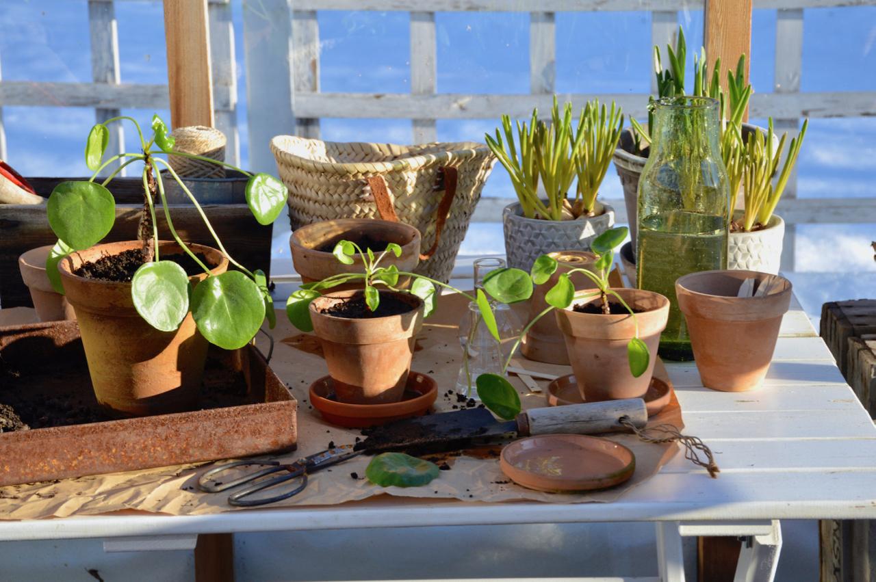 viherkasvien kevätpuuhia