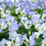 Kevät saapui – puutarhamyymälä on auki!
