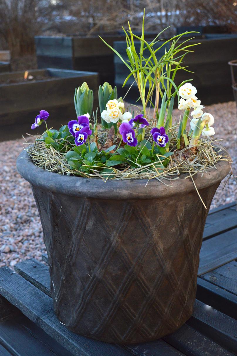 kevään ruukkuistutukset