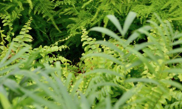 Vihreän vallassa