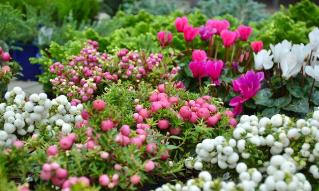 Syysihanuuksia puutarhamyymälässä