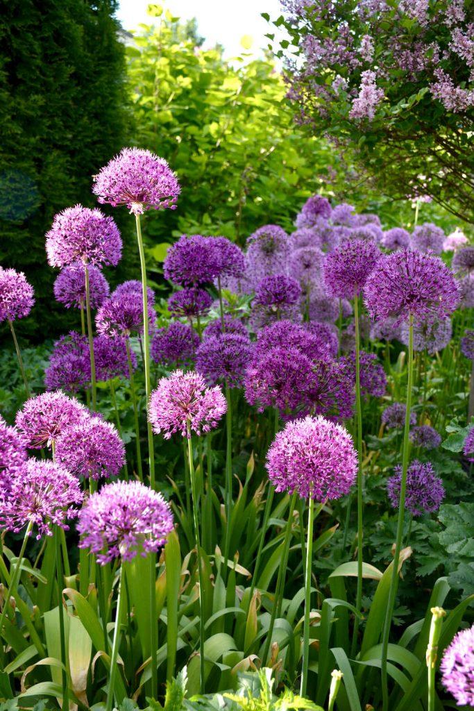 ukkolaukka-kukkii