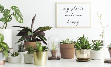 Trendikkäät ja hyödylliset huonekasvit