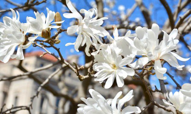 Magnolia – haaveissa vainko oot mun?