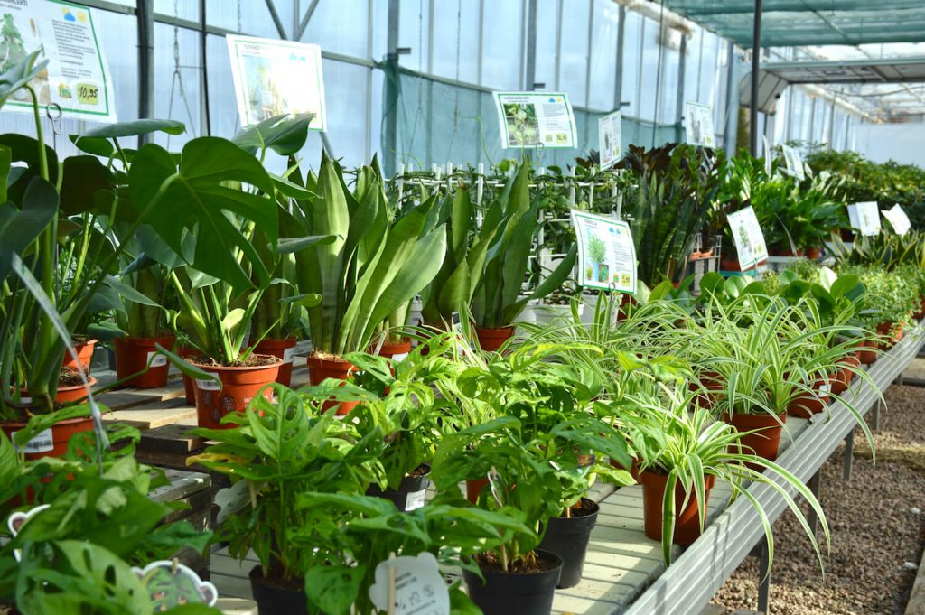 puutarhamyymälä viherkasvit