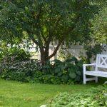 Kuunliljat tuovat runsautta puutarhaan